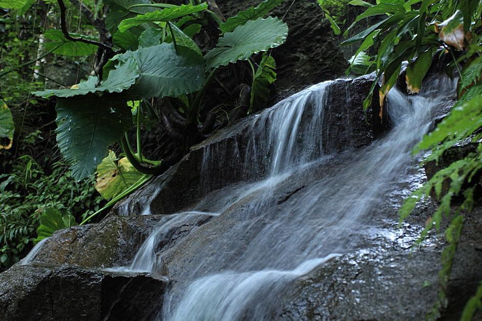 rainfore-2