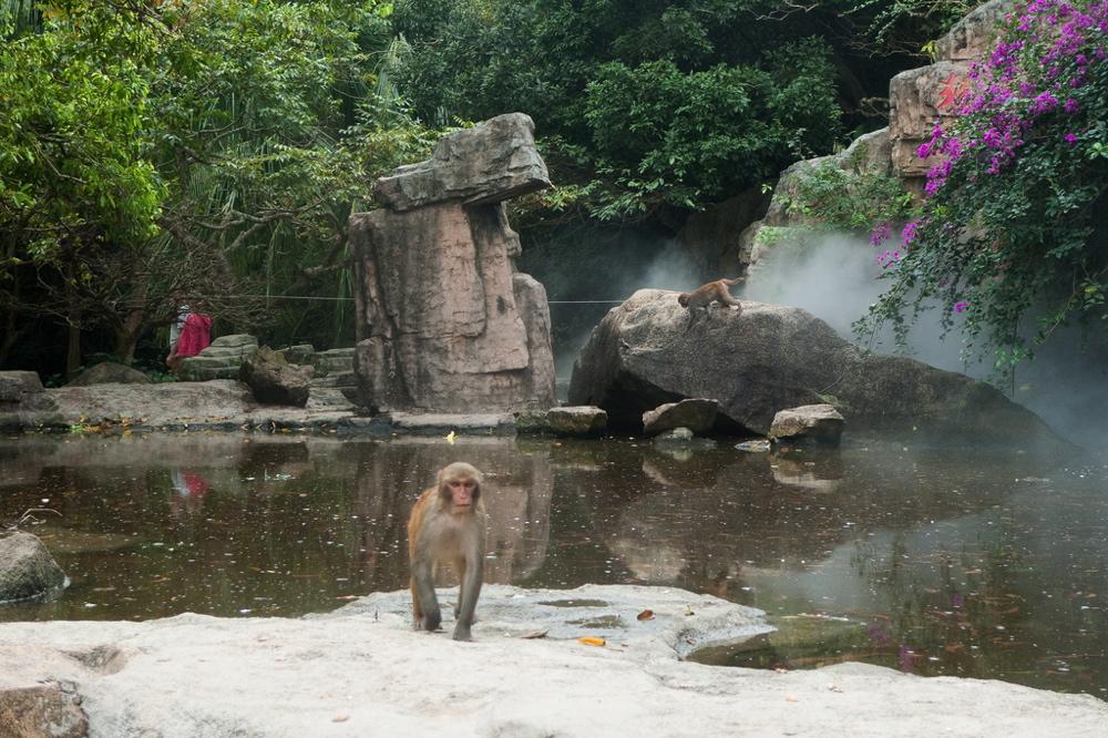 monkeyjpg4