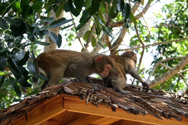 monkeyjpg5