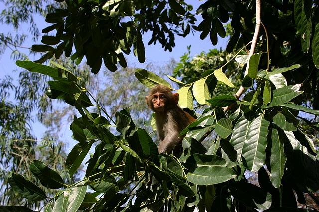 monkeyjpg6
